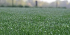 How to maintain your lawn in Sydney